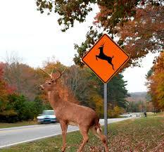 deer next