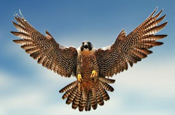 falcon-470x310@2x2052502629..jpg
